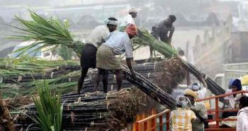 Sugarcane growers likely to get higher prices: Minister