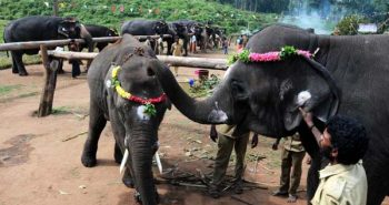 A jumbo holiday awaits TN's elephants