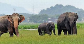 Four States come together for elephant census