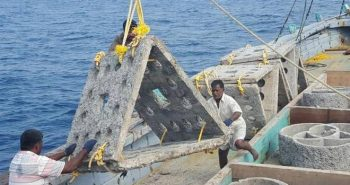 Artificial reefs to boost fishing in Pulicat