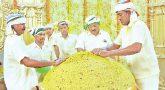 Ganesh Chaturthi Special 580 kg laddu prepared