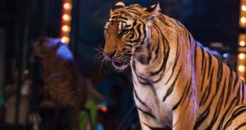 Government Banned Animals in circus shows