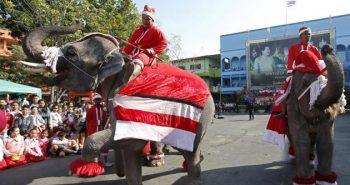 Elephant celebrates Christmas Festival