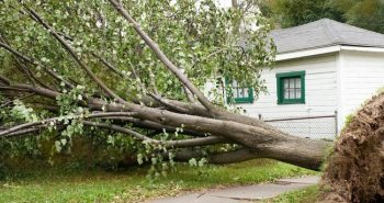 US:Many trees damaged by heavy winds